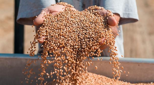 mani-cereali